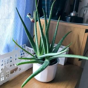plantpots