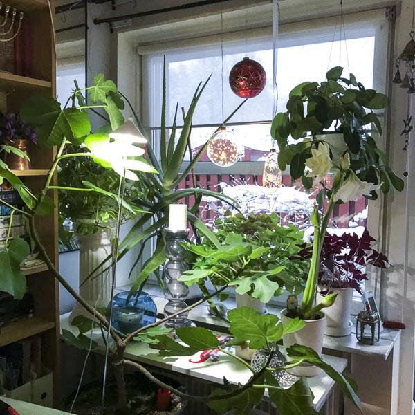 plantsandlamps