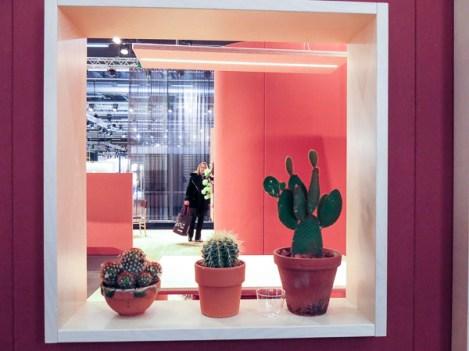 Last years number one designer plants.