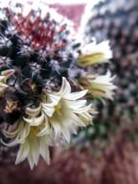 cactus2017-04-05_2