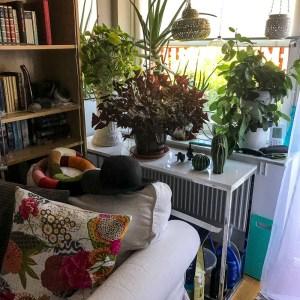 livingroom, tropicool