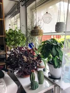livingroom, livingroomwindow, plants