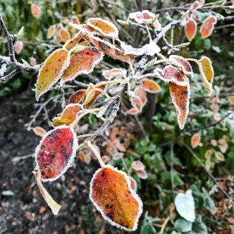 frost20171108_4