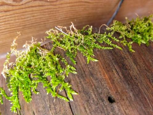 moss, treestump