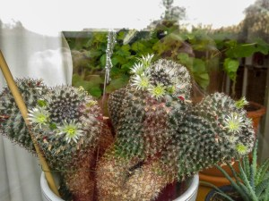 cactus, indoorplants