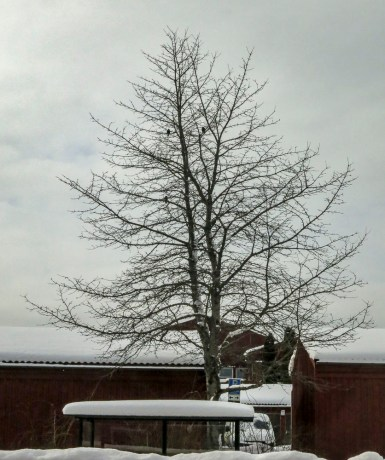 the tree across the road