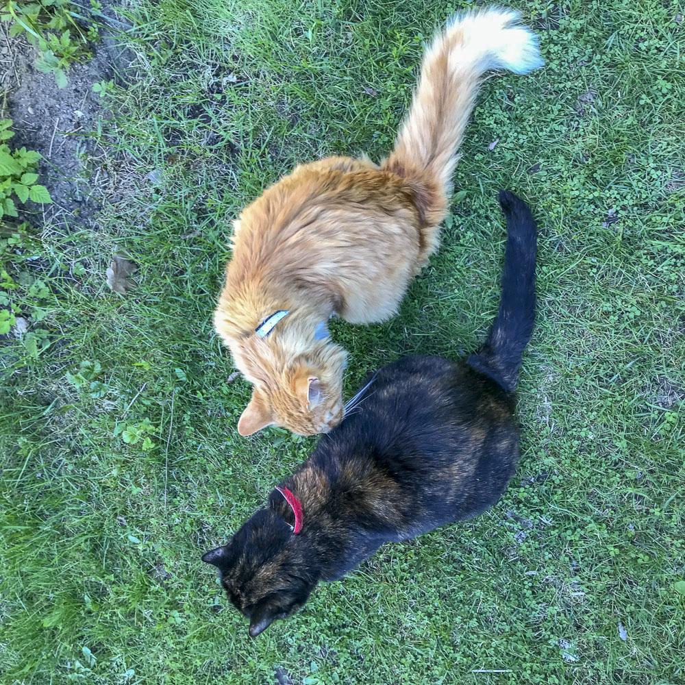 gustav, alice, cats, springtime, summer, garden