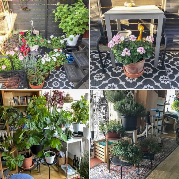 indoorplants, plants