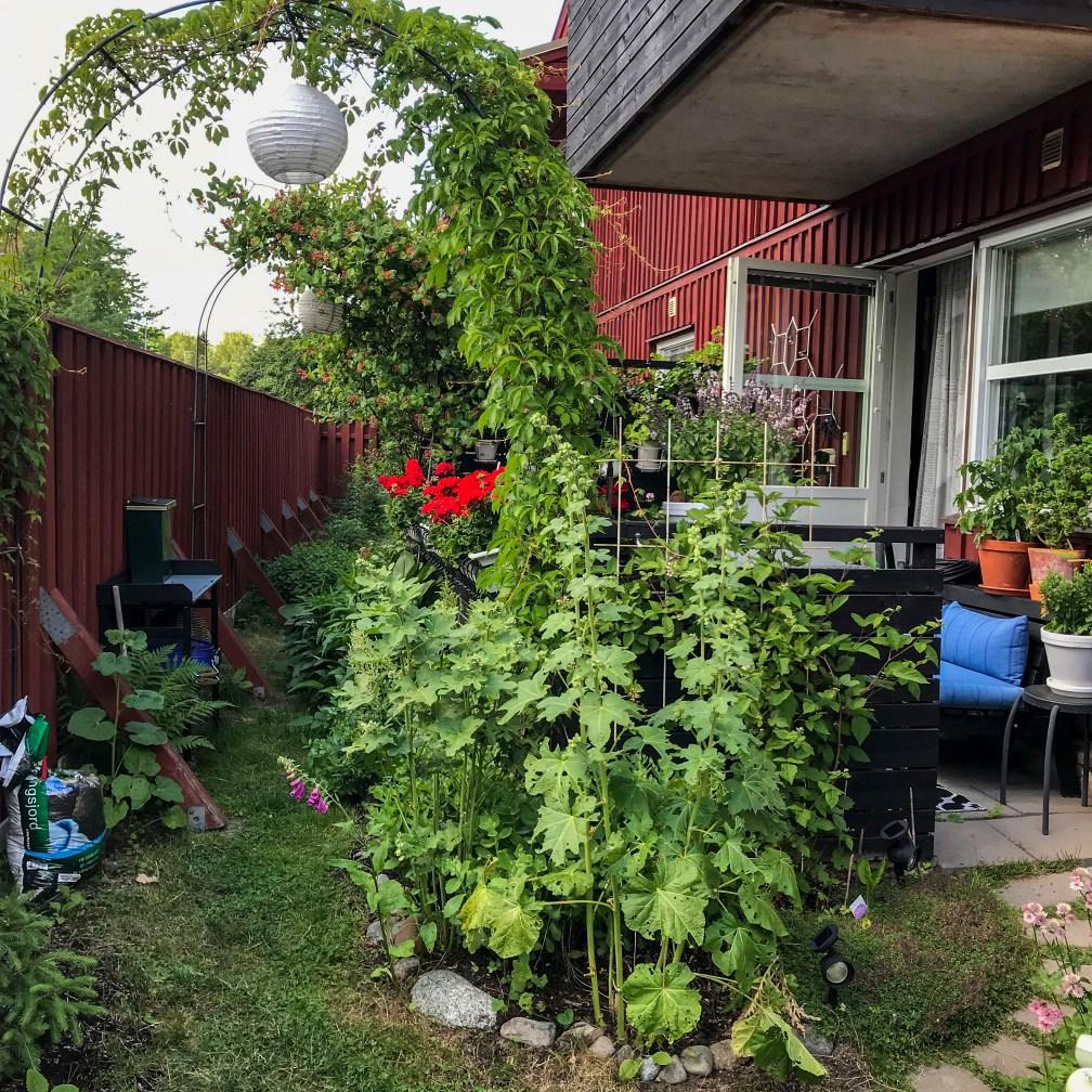 entrance, garden