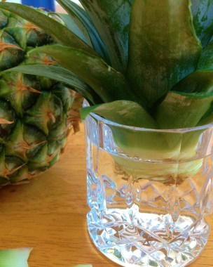 The water level should be just under the pineapple plant.