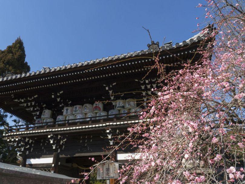 Umenomiya Taisha est le protecteur des brasseurs de saké; de grands fûts de saké sont visibles au sommet du Rōmon.