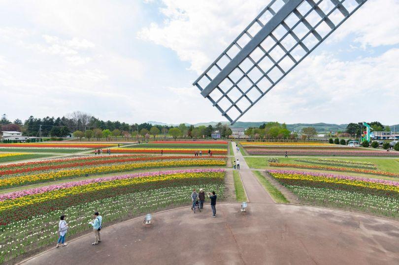 La terrasse d'observation située à l'intérieur du moulin offre une vue panoramique sur les champs de tulipes.
