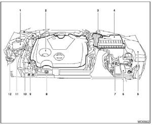 Engine partment check locations  Illustrated table of contents  Nissan Maxima Owners Manual
