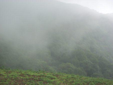 Misty Weather at Bhimashankar
