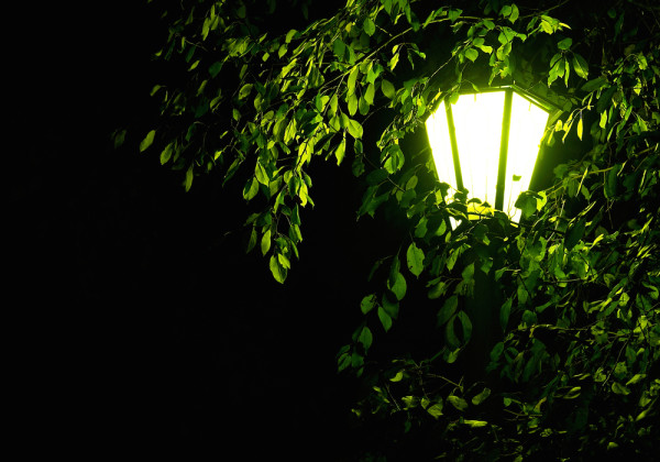 Outdoor Light in Tree