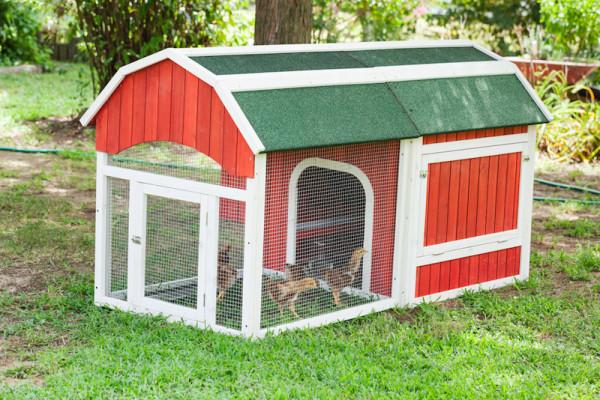 Barn Style Chicken Coop