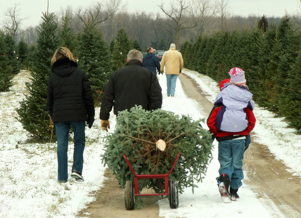 Family Hauling Christmas Tree