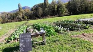 Labyrinthes gourmands : Cueillez vous-même vos légumes à Saint Baldoph