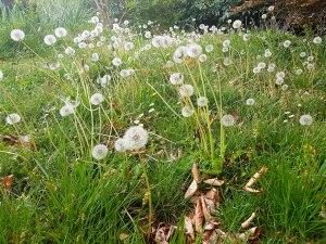 Tondre la pelouse, une dépense inutile pour une esthétique futile...