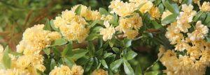 La journées des plantes au lac d'Aiguebelette du 3 et 4 avril 2021 est annulée