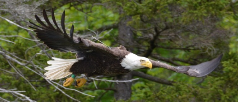 Early Bird Bald Eagles Already Nesting New Jersey Conservation Foundation
