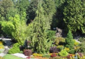 Queen Elizabeth park large quarry garden