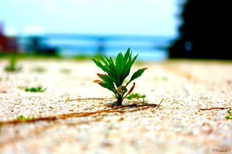 壁紙1木になりたい草