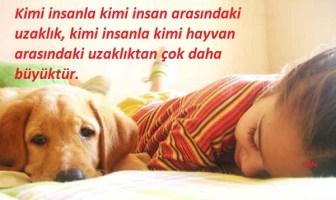 Hayvan Sevgisi Hakkında Güzel Sözler
