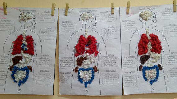 Ic Organlarimiz Modeli Nasil Yapilir Ansiklomedia