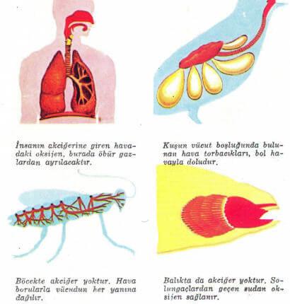 Oksijen Kullanımı