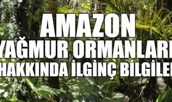 Amazon Yağmur Ormanları Hakkında İlginç Bilgiler