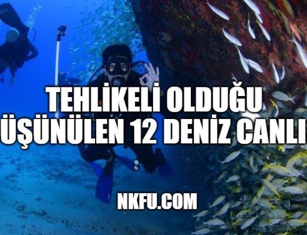 Tehlikeli Olduğu Düşünülen 12 Deniz Canlısı