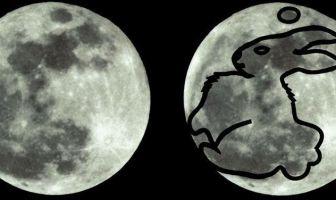 Ay Tavşanı