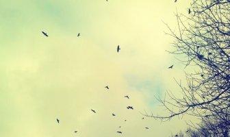 Hayat Kısa Kuşlar Uçuyor Ne Demek? Açıklaması / Kompozisyon