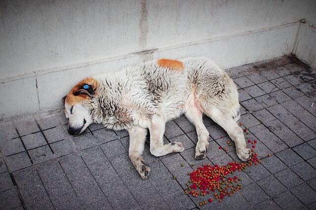 Sokak Hayvanları