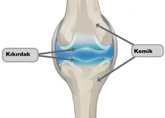 Kemik ve Kıkırdak Doku Arasındaki Farklar ve Ortak Özellikler Nelerdir?