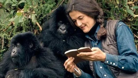 Dian Fossey Reading to a Gorilla