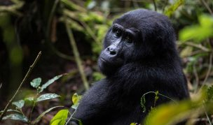 9 Day Gorilla Adventure Safari