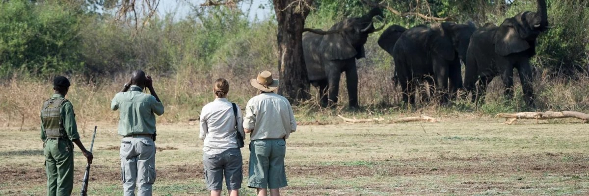 honeymoon safari in uganda