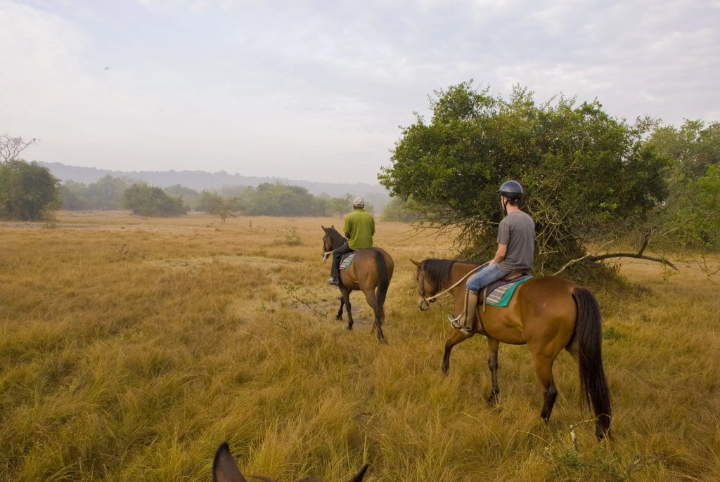 Explore the wild on a horseback