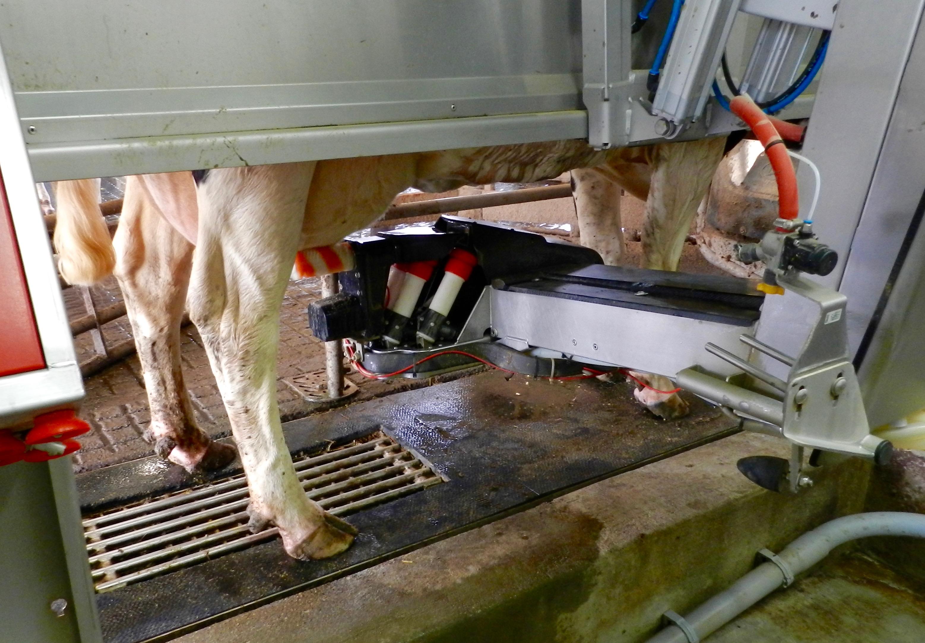 Kroger Dairy Winchester