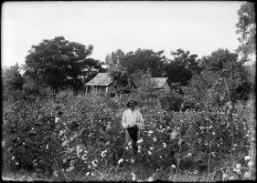 Portrait of an unknown man in a cotton field near Natchitoches, Louisiana, USA made around 1910 by the Dutch photographer P.H. van Son who lived and worked in the USA for some years.