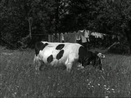 https://i2.wp.com/www.nlfilmdoek.nl/wp-content/uploads/2011/09/fanfare1.jpg