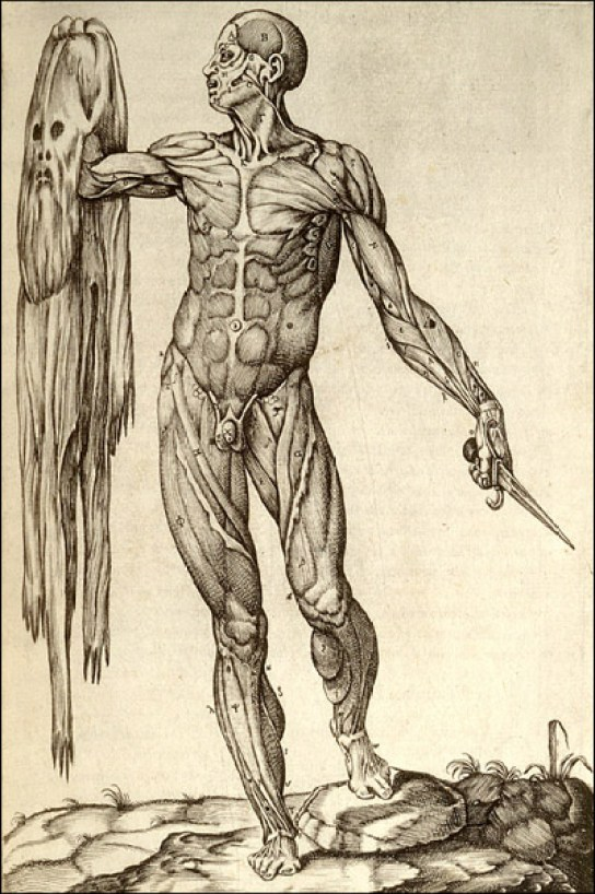 Flayed man holding up his skin, with stretched-out face. Cropped, from Juan Valverde de Amusco, Anatomia del corpo humano... (Rome, 1559). Copperplate engraving.