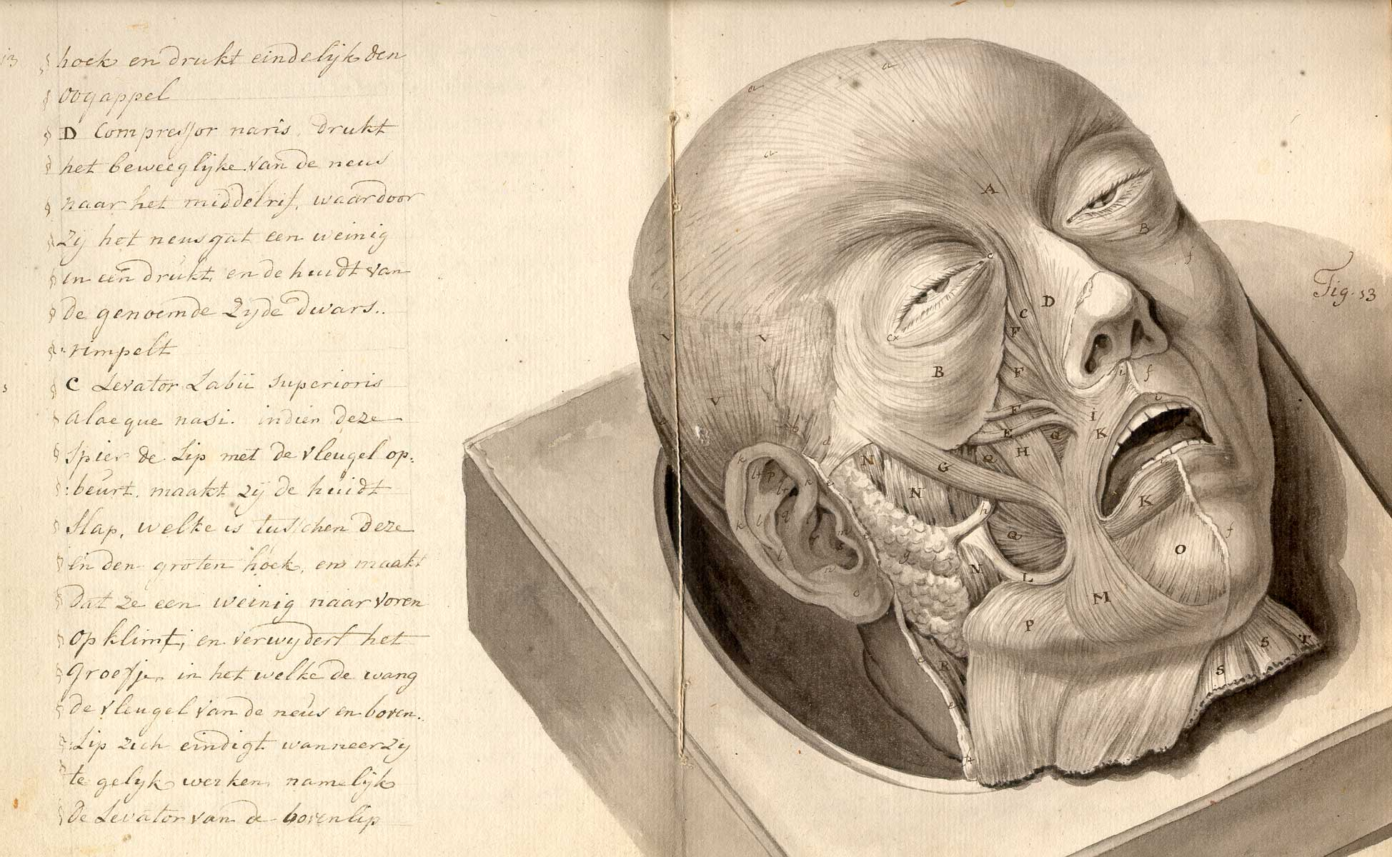 Treatise on physiognomy