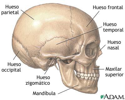 Anatomía Humana – jordybazurtoblog