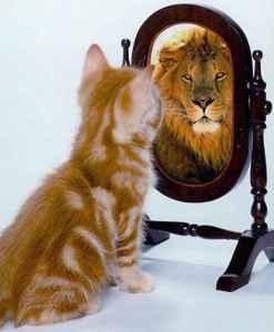 social consciousness cat into lion