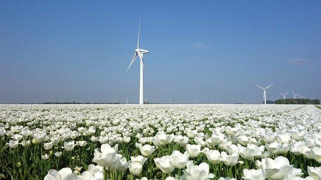 Spécialisation Traductions SEO en néerlandais centrées sur la durabilité