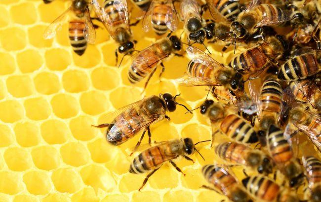 Рівненщина: Смерть від бджіл – атакували пасічника