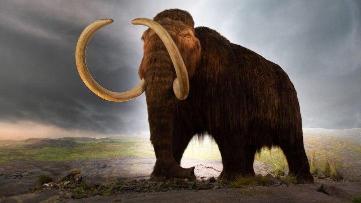 Навіщо це потрібно: Вчені створять морозостійкого слона, який буде виглядати як мамонт